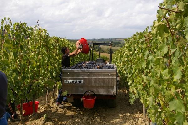 Грузовичок для ручного сбора винограда