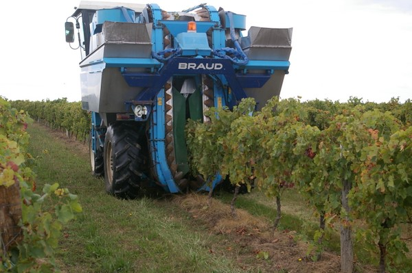 Уборочная машина на винограднике